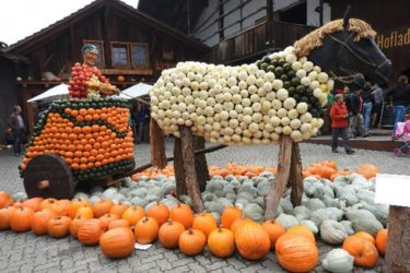 スイスで手に入る日本のかぼちゃ ( Kabocha )