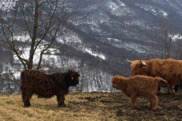 あの「イケメン牛」が見られる!マドンナ・ダルラ