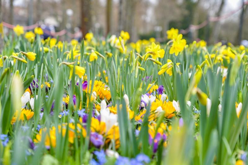 ベルン、バラ公園の春の花々