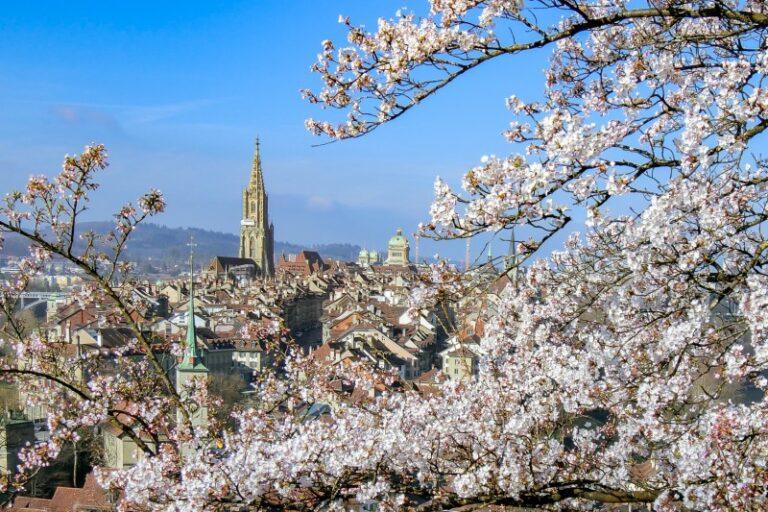 ベルンにあるバラ公園の桜と旧市街の風景